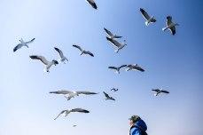 seagulls at Walvis Bay