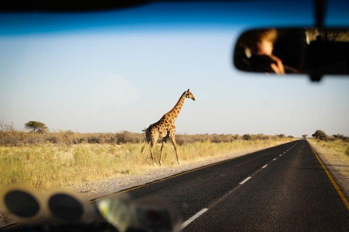 giraffe at Etosha National Park
