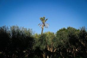 Palmeraie - green oasis of Marrakesh