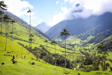 Cocora Valley, near Salento